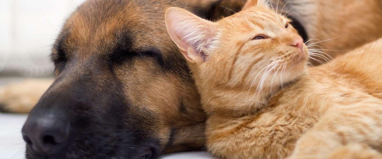 Google Photos herkent nu ook je huisdieren