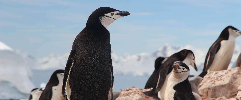 Google algoritme Penguin 4.0 update is live