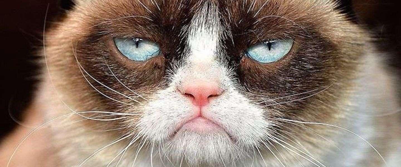 Grumpy Cat nu ook in Madame Tussauds