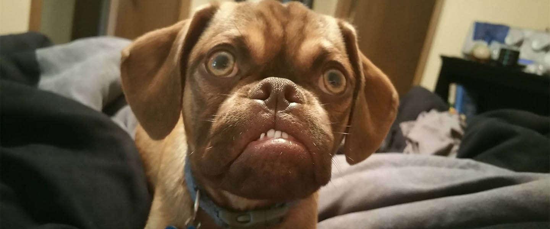 Na Grumpy Cat is er nu ook Grumpy Dog