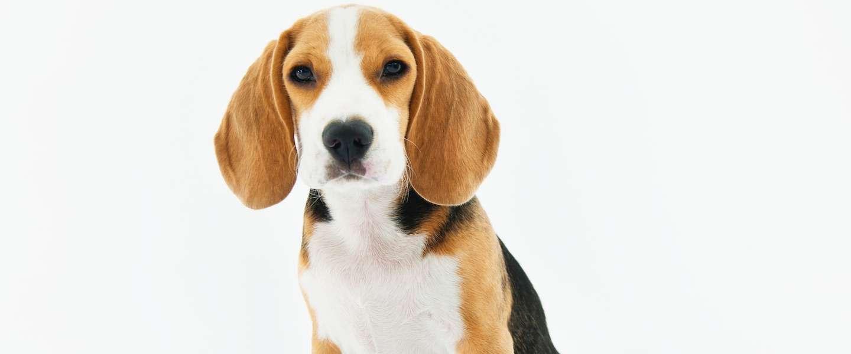 Chinese app Megvii kan honden aan hun neus herkennen