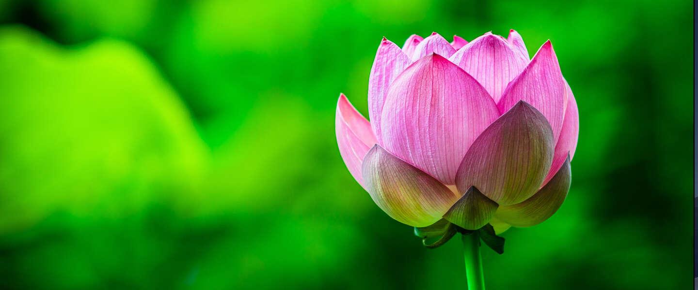 Huawei en duurzaamheid, het groene blad aan de lotusbloem