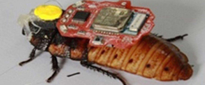 Chinese student bestuurt kakkerlak met mind-controle