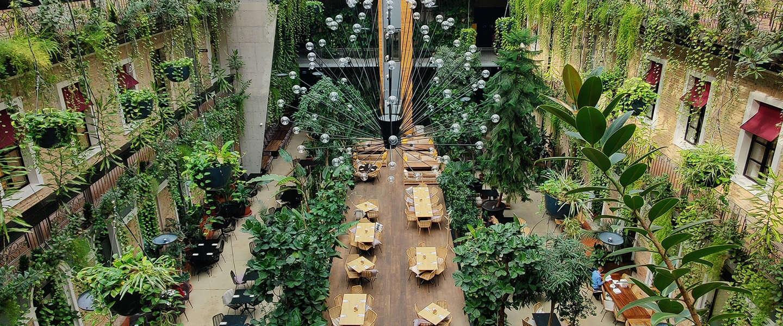 Zijn je kamerplanten wel zo duurzaam?