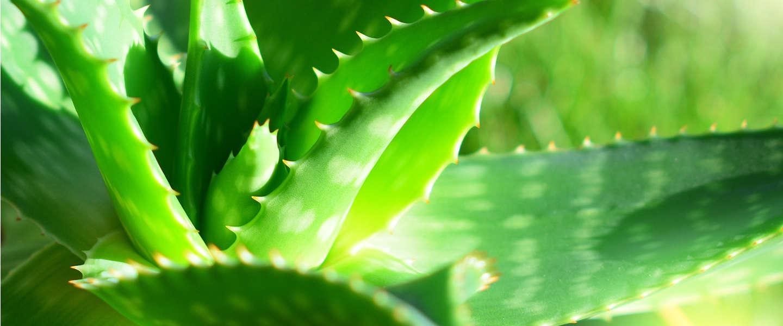 8 x gezonde lucht, thuis of op kantoor, met luchtzuiverende planten