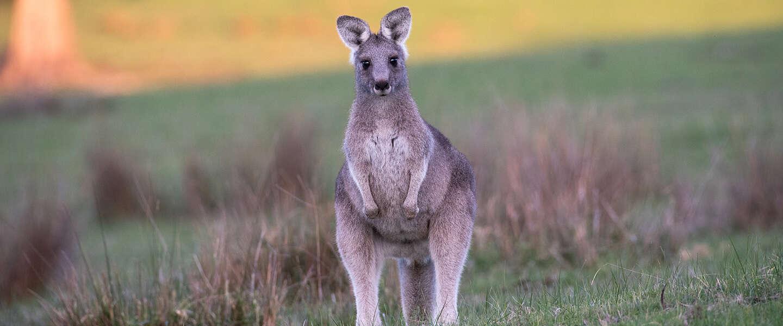 Goed Nieuws: Behind her eyes op Netflix, vrouw ontdekt woning achter spiegel en communicerende kangoeroes
