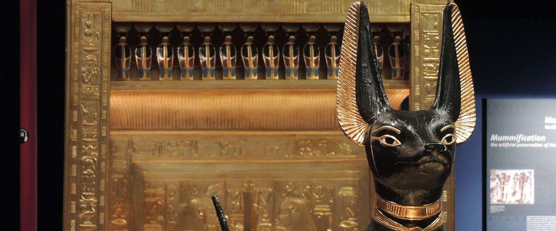 Zo ziet een gemummificeerde Egyptische kat er echt uit