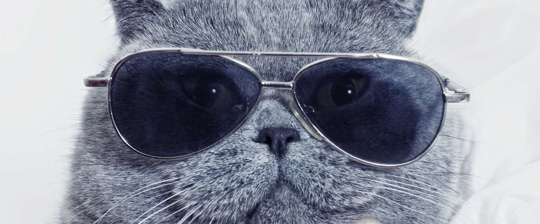 Social check: staat het internet écht vol met kattenplaatjes?