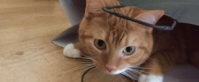 Zijn katten op tv net zo populair als online?