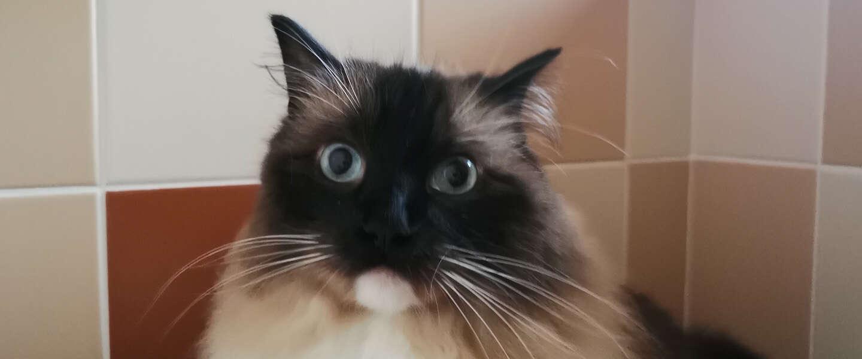 Avondklok voor katten: moeten we aan de slimme kattenluikjes?