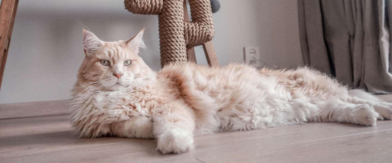 Poezenbazen: een webshop voor katten met 5 Catfluencers aan het roer