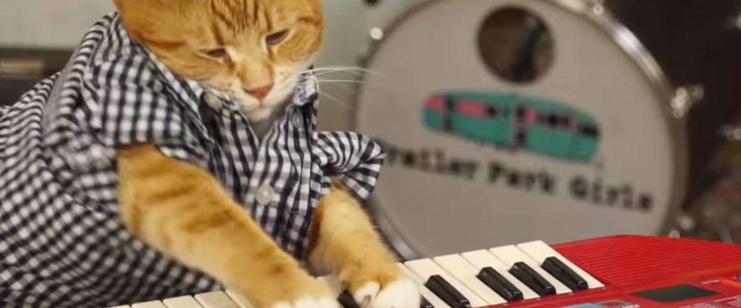 Going viral: Keyboard Cat is back!