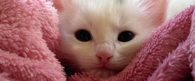 Bevroren kitten in de sneeuw leeft weer na hartmassage van een uur