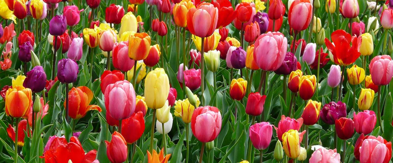 Het voelt eindelijk als lente, ook al is het vandaag warmetruiendag