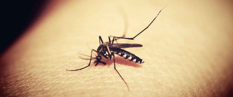 The final frontier: Florida wil 750 miljoen genetisch gemodificeerde muggen vrijlaten