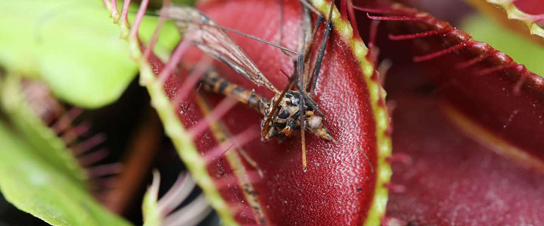 Last van muggen? Dit moerastuintje is de oplossing