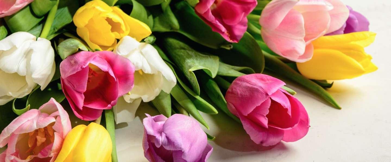 De Nederlandse politiek uitgelegd aan de hand van bosjes tulpen