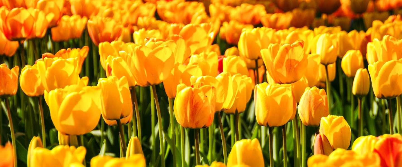 De lente begint écht tijdens het paasweekend