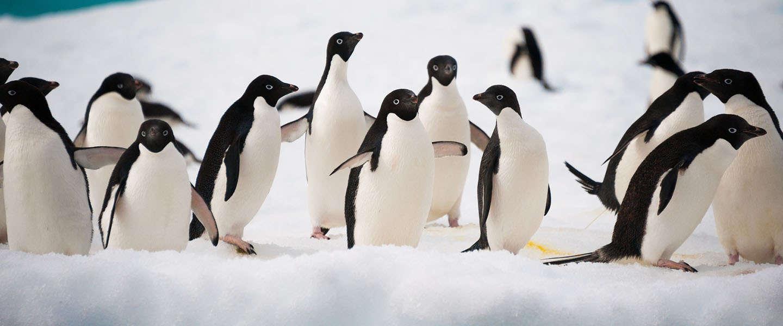 Links, Google Penalties en Penguin in 2015