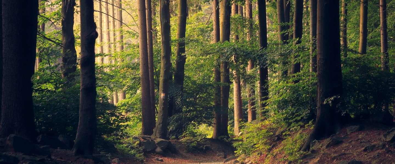 10 miljoen nieuwe bomen in Nederland
