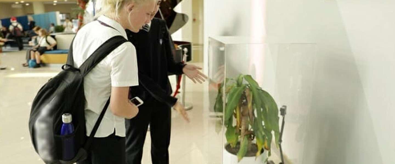 Verbaal gepeste plant doet het slechter in IKEA-experiment