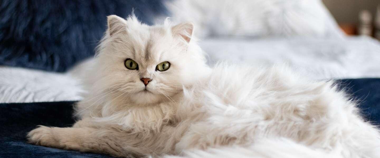 Kattenliefhebbers opgelet: op Netflix kun je nu kijken naar Poeslief - Een Ode aan de Kat