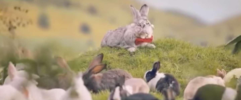 """Viral video: Poolse regering zegt """"doe als konijnen!"""" tegen volk"""