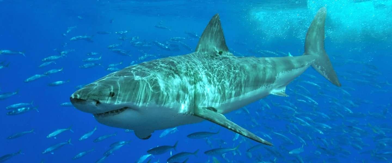 Het is weer Shark Week op Discovery!