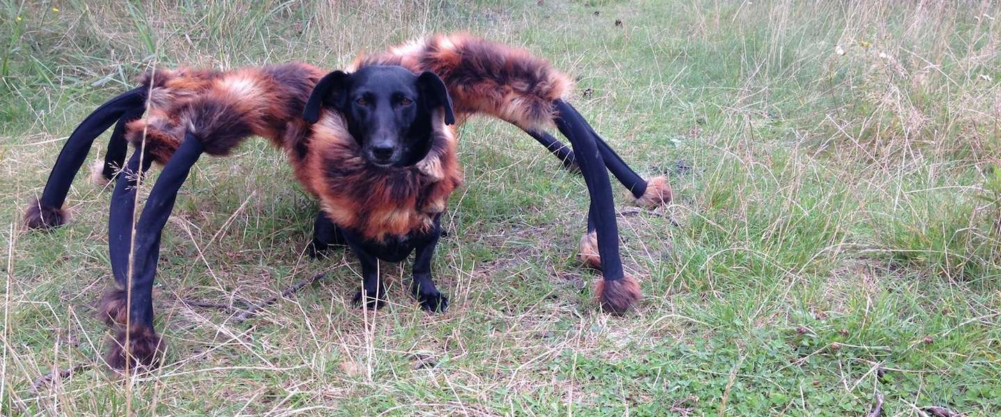 Going Viral: Giant Spider Dog