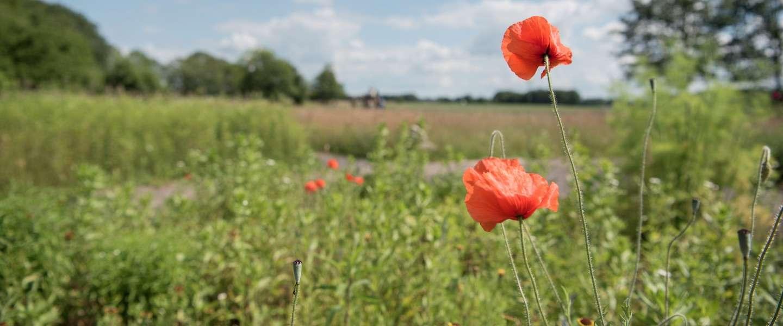 Groot succes voor campagne Welkom terug in Nederland