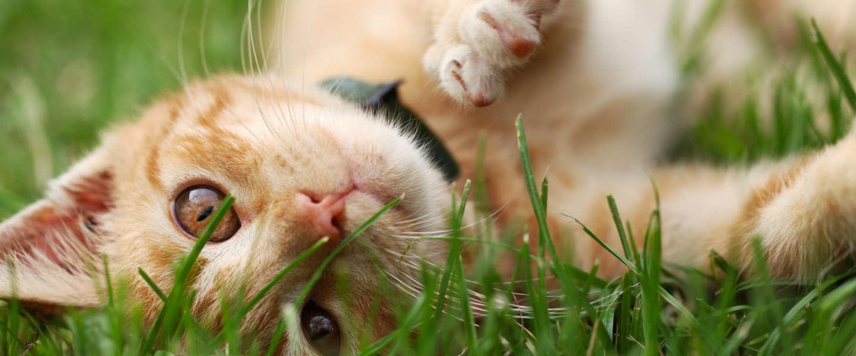 Trakz is een FitBit voor huisdieren