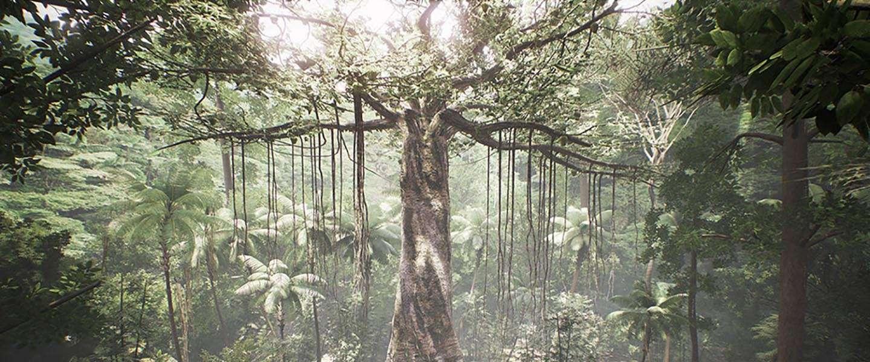 Kijk en voel je als een boom in het regenwoud!