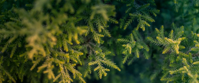 Uber gaat samen met Praxis weer kerstbomen thuisbezorgen