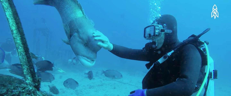 Video: deze Japanse duiker bezoekt al 25 jaar elke dag dezelfde vis