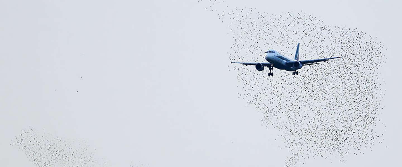 Nieuwe drone jaagt vogels weg van luchthavens