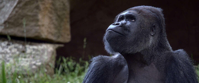 Goed nieuws: WallStreetBets helpt gorilla's, nieuwe Life is Strange en Landelijke Opschoondag