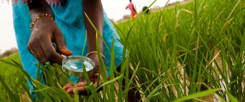 Waterwatch Cooperative helpt kleine boeren connected te blijven