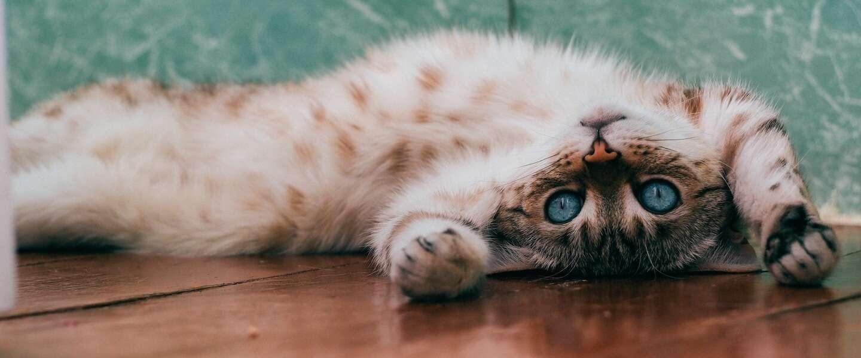 International Cat Day: 10 grappige weetjes over katten