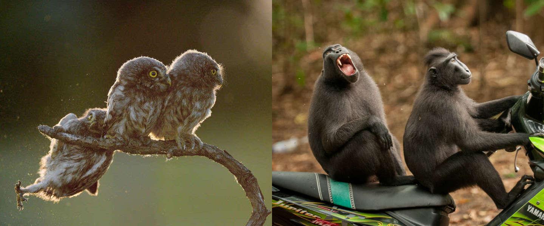 Dit zijn de hilarische winnaars van de Comedy Wildlife Photography Awards