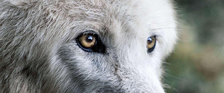 Goed Nieuws Vrijdag: remake filmposter Blue Lagoon, Raised by Wolves en International Cat Day