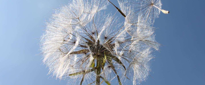 Zaaien en oogsten met B2B contentmarketing