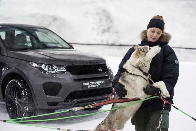 Land-Rover-hores-power-vs-dogpower-3
