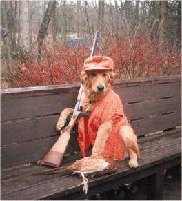 1089301677keywordhounddog