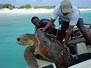1094272245turtle tracking