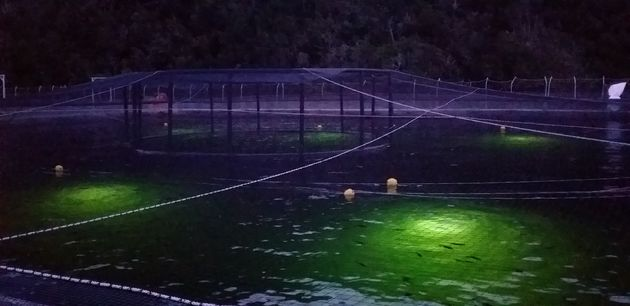 Aquaculture_lighting_3