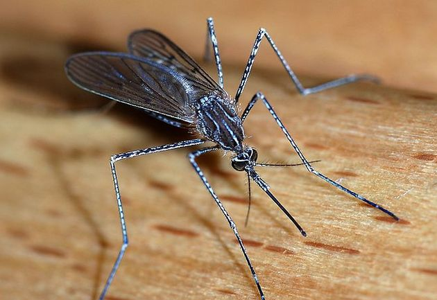 Bill Gates vraagt aandacht voor Mosquito-week