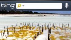 Bing App voor op de iPhone