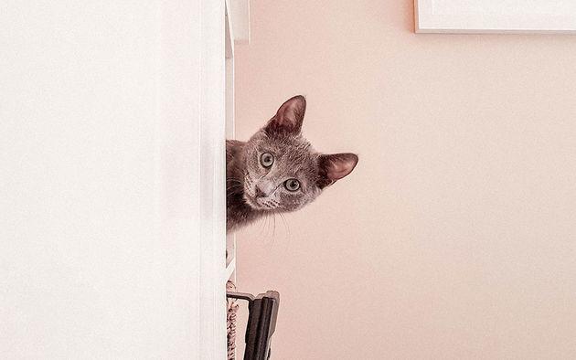 Catfluencer-poezenbazen-boppe