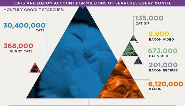 Cats en Bacon domineren het internet [infographic]