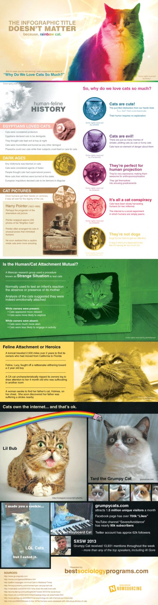 cats-infographic